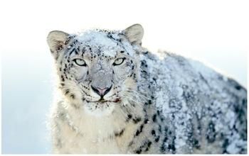 Apple-Snow-Leopard.07.01.10.jpg