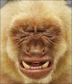 unhappy-monkey.07.20.10.jpg