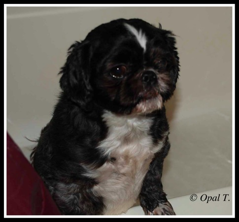 Bathtime Mr Bentley 3