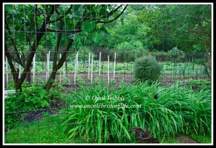 Garden 05 15 12 1