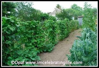Gardening 06 24 12 3