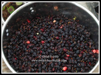 Mulberries 1