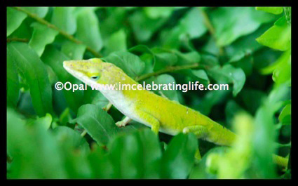 Green anole Lizard 2