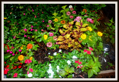 Flowers; small flower garden