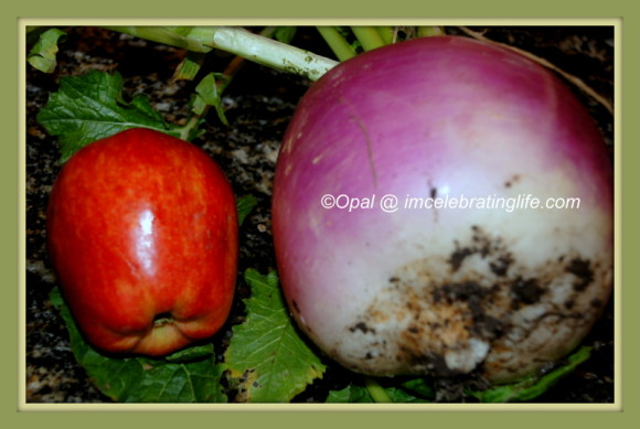 This is one of our 'smaller' turnips.