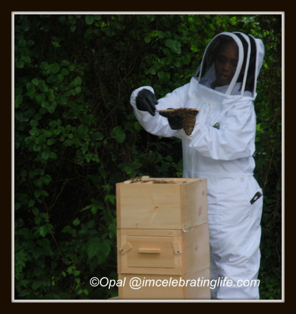 1st Warre hive inspection_1