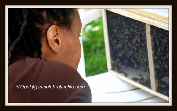 Honeybees - Package Bees Installation_1
