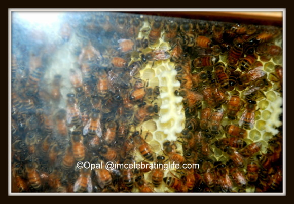Warre hive early morning activity_2.6.20.13