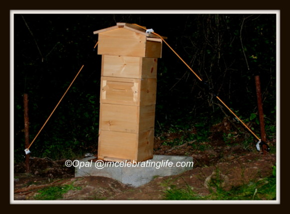 Warre hive - early morning view_1