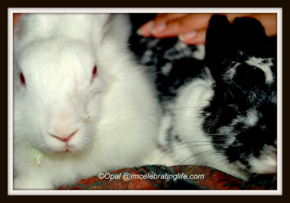 Female rabbit bonding_1