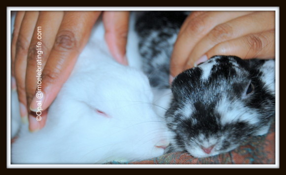 Female rabbit bonding_4