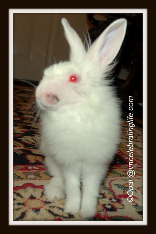 Lionhead bunny-stitches