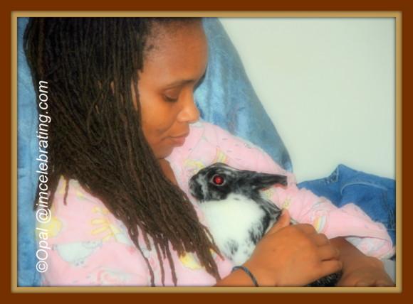 Netherland Dwarf rabbit Oreo -snuggling_1