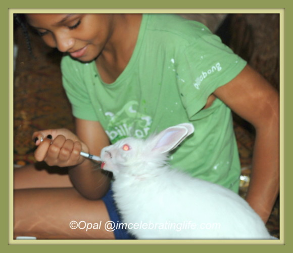 Lionhead rabbit-giving Gracie her meds_2