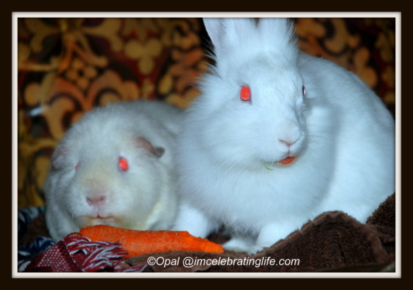 Angel and Gracie eating carrot_1
