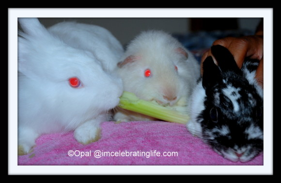 Furbabies-Gracie-Angel-Oreo_1