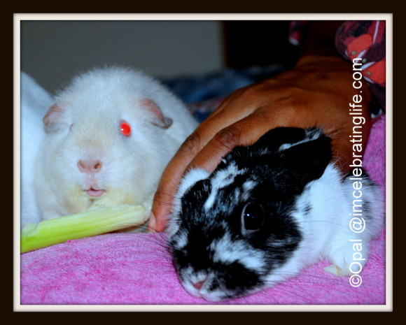 Furbabies-Gracie-Angel-Oreo_3
