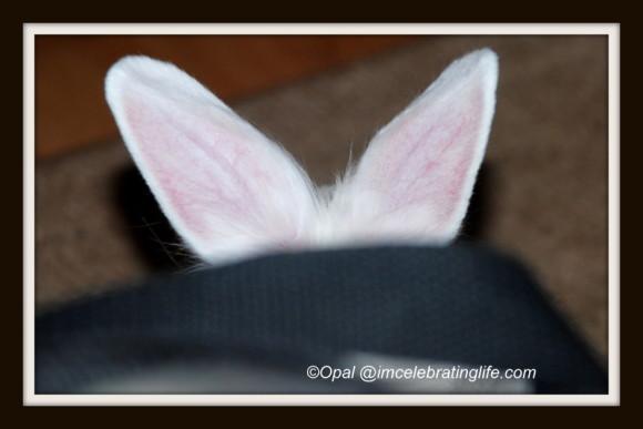 Gracie lionhead rabbit_3.1.2.14