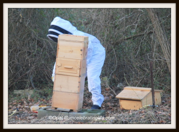 Hive Inspection_1.1.12.14