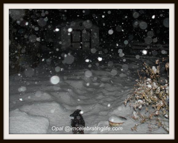 Snow Storm_1.04.02.13