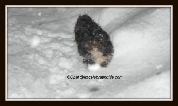 Snow Storm_2.04.02.13