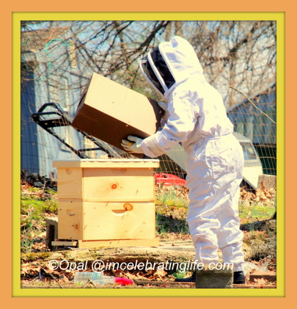 Honeybees 5 frame nuc