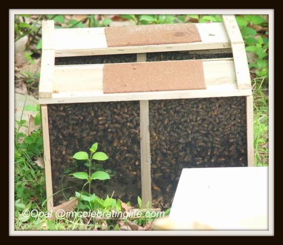 Package honeybees 1 5.10.14