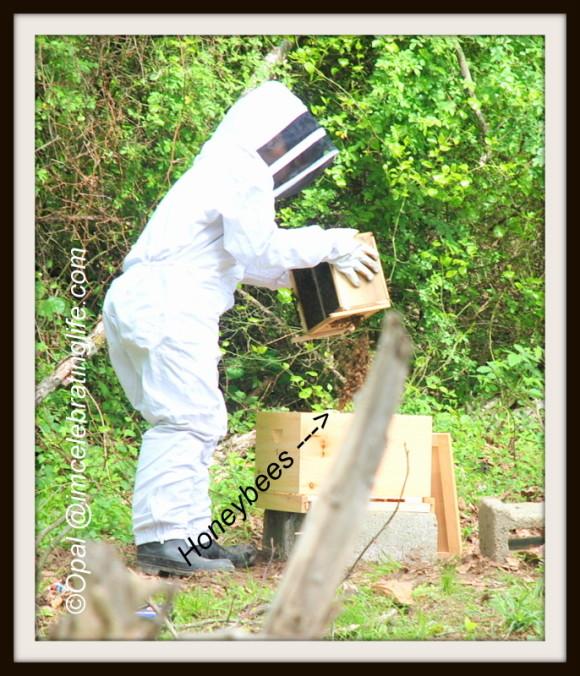 Shaking the Honeybees 1 5.10.14