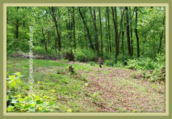 Woods 5.10.14