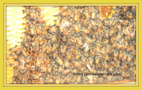 Honeybees 1 06.27.14 1
