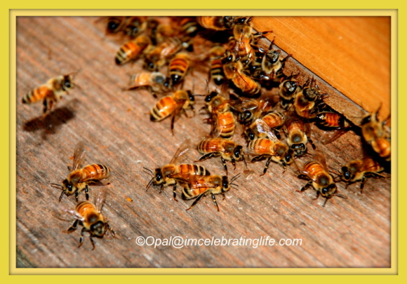 Honeybee meeting_2 06.27.14