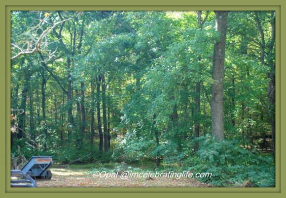 Woods.10.21.15
