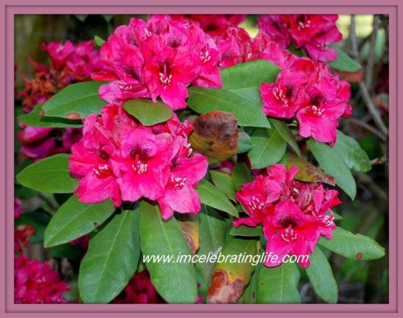 Flower Garden ICL _2 5.20.16